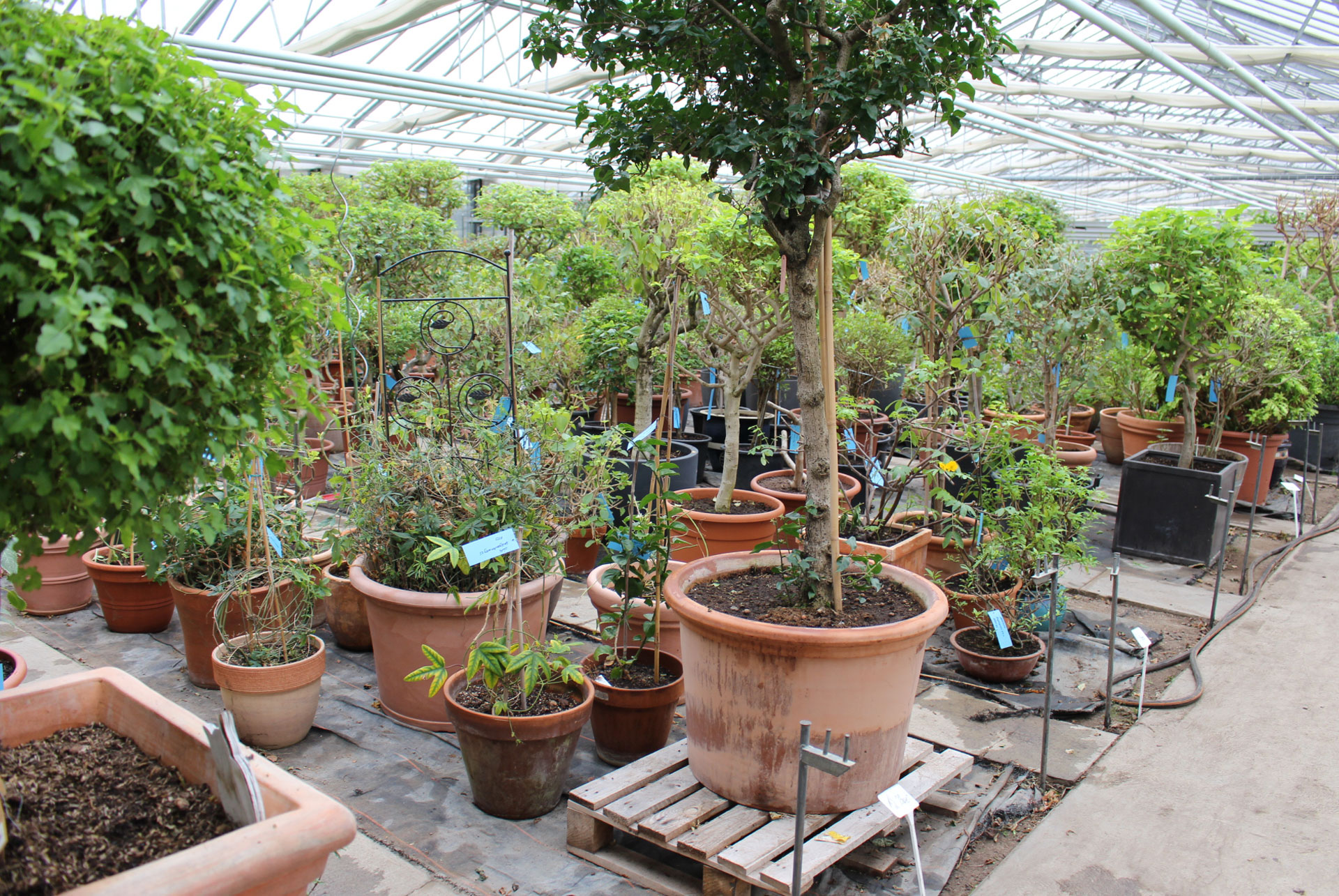 Pflanzenüberwinterungen