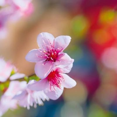 Grusskarte Blumen
